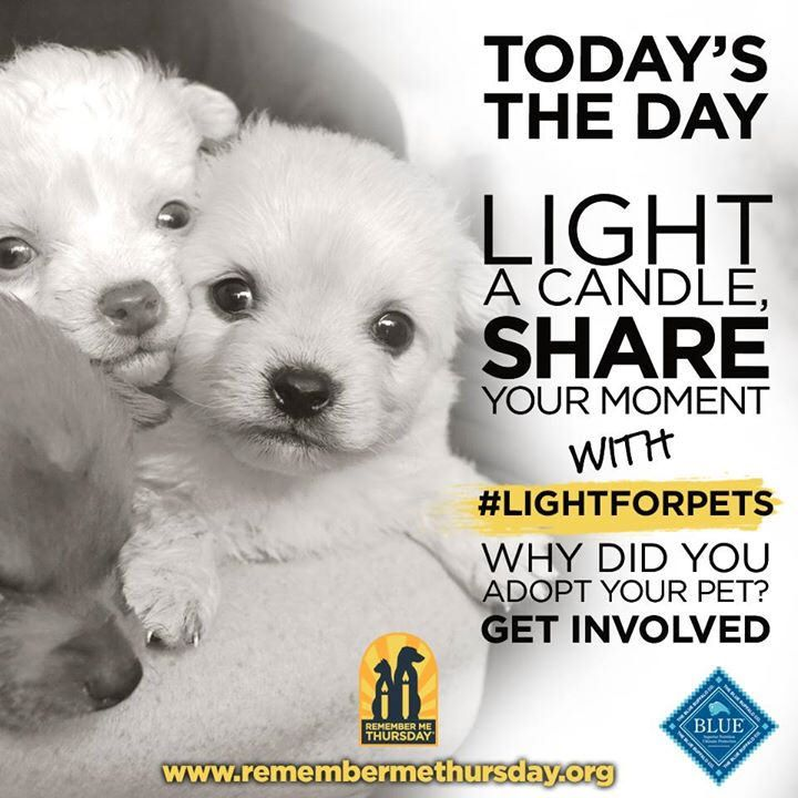 Today is Remember Me Thursday, a global day where we light a candle to remember all the wonderful souls who never made it out of the pound system alive, while also shining a light on those who are currently waiting to be adopted. This month marks four yea