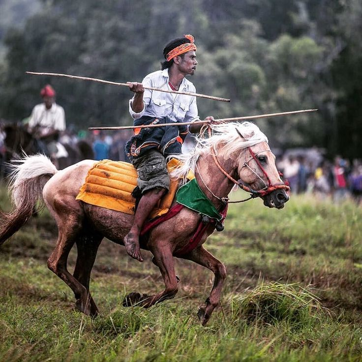 A #pasola fighter rides into the fray. He is taking part in a ritualised battle in #Sumba #Indonesia . Pasola is a mounted spear-fighting competition from western Sumba Indonesia. It is played by throwing wooden spears at the opponent while riding a horse to celebrate the rice-planting season. The word pasola means spear in the local language and derives from the Sanskrit sula. According to legend pasola originated with a woman from the village of Waiwuang. When her husband - a local leader…