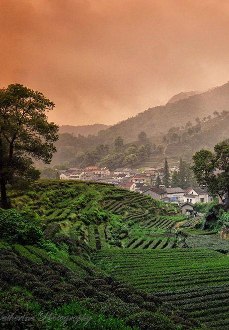 Longjing Village: Hangzhou's ultimate green tea experience – what a beautiful view   / photo by Puh Huey Suen