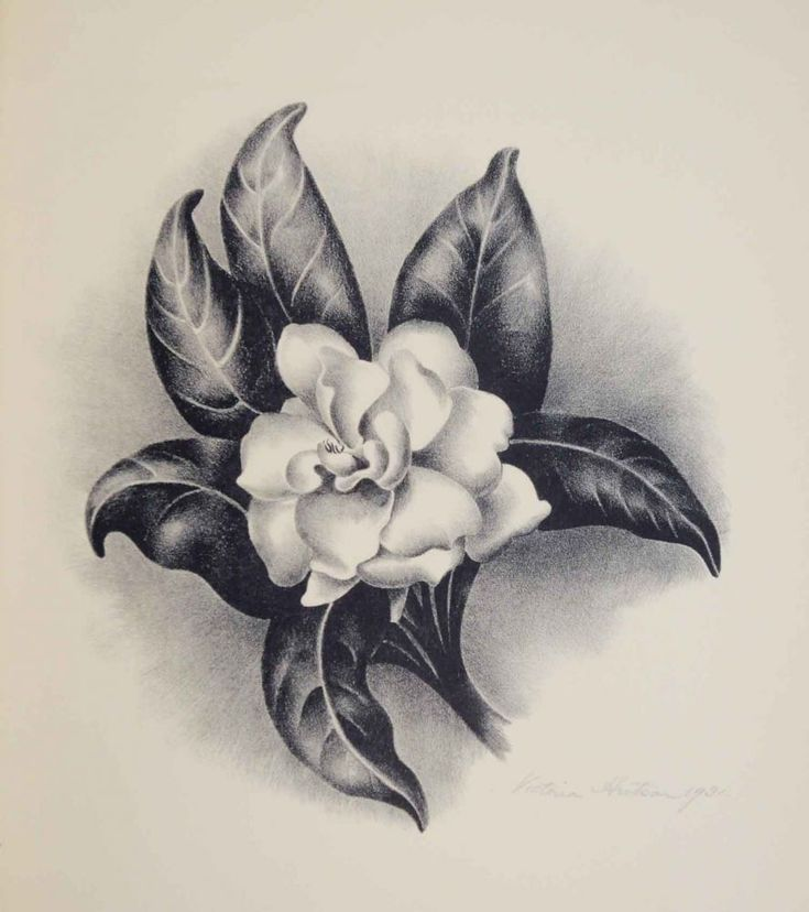 gardenia lithograph - Google Search