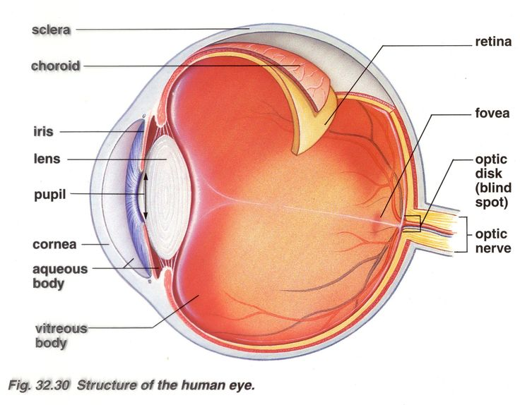 eyeball diagram | Structures of the human eye. Cool, eh?