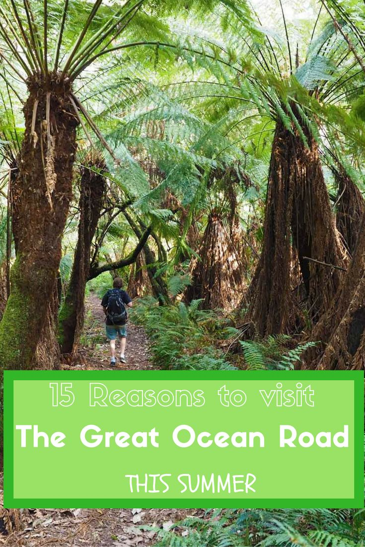 15 Reasons to visit the Great Ocean Road in Summer by See Something New