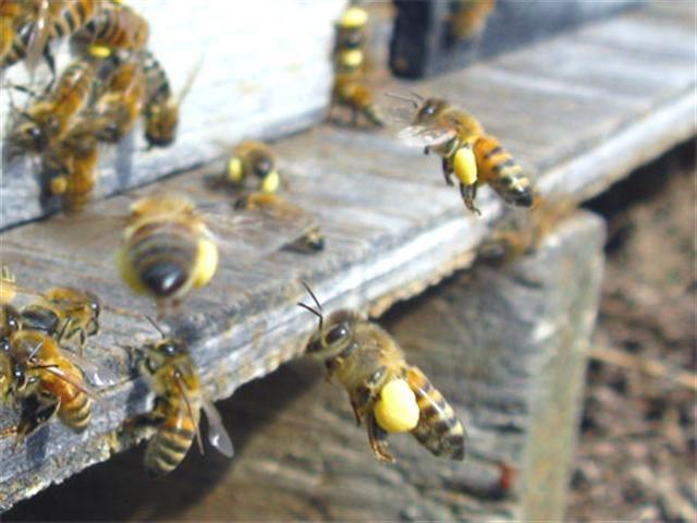 de las Abejas!  Bees!