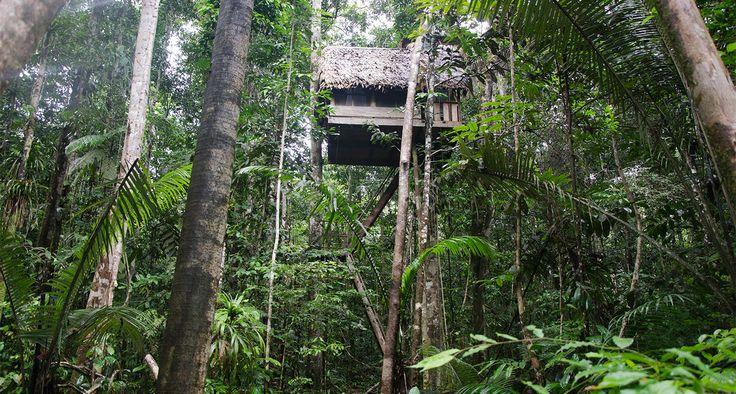 Amazonas, arriésgate donde podrá disfrutar una noche durmiendo en plena selva, destino exótico, pesca deportiva,avistamiento delfines