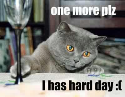 i can haz drink?: Funny Pics, Funny Cat, Humor, Funny Dogs Pictures, Hard Day, Kitty, Drinks, True Stories, Animal