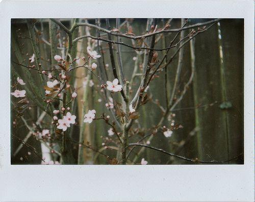 Fuji Instax Wide Film | Flickr - Fotosharing!