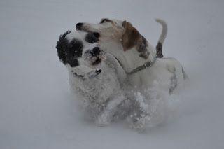 Gårdstunet Hundepensjonat: På nett igjen! Herlige hunder på tunet!