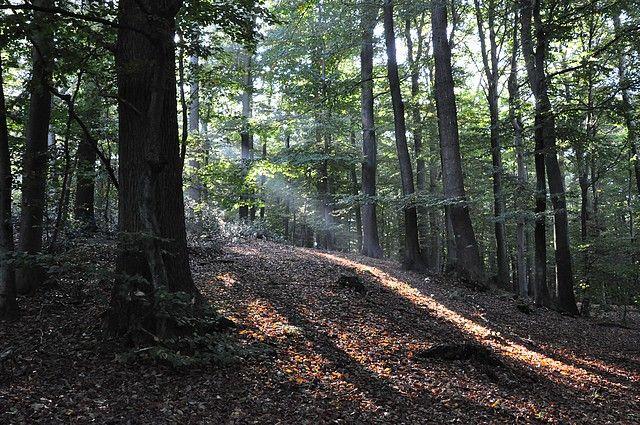 Naturpark Hüttener Berge : Bilder