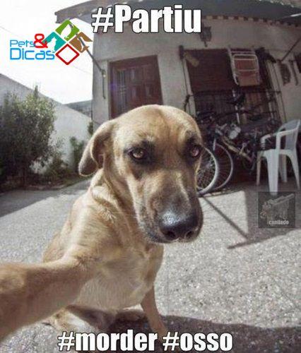 Fotos de animais engraçados para Facebook   Pets e Dicas