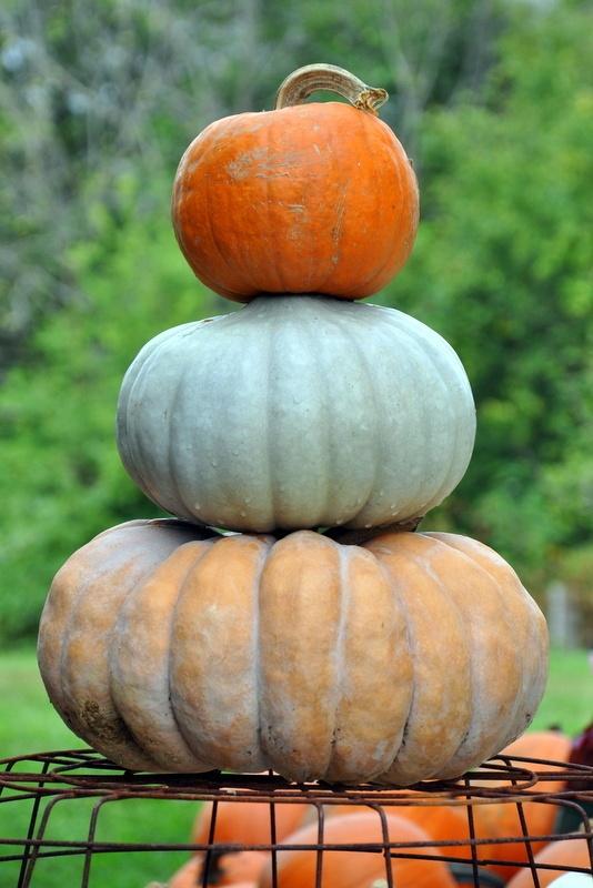 pumpkin stack the garden patch pelly farm