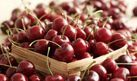 How to Grow a Cherry Tree from Seed or Pit   eHow
