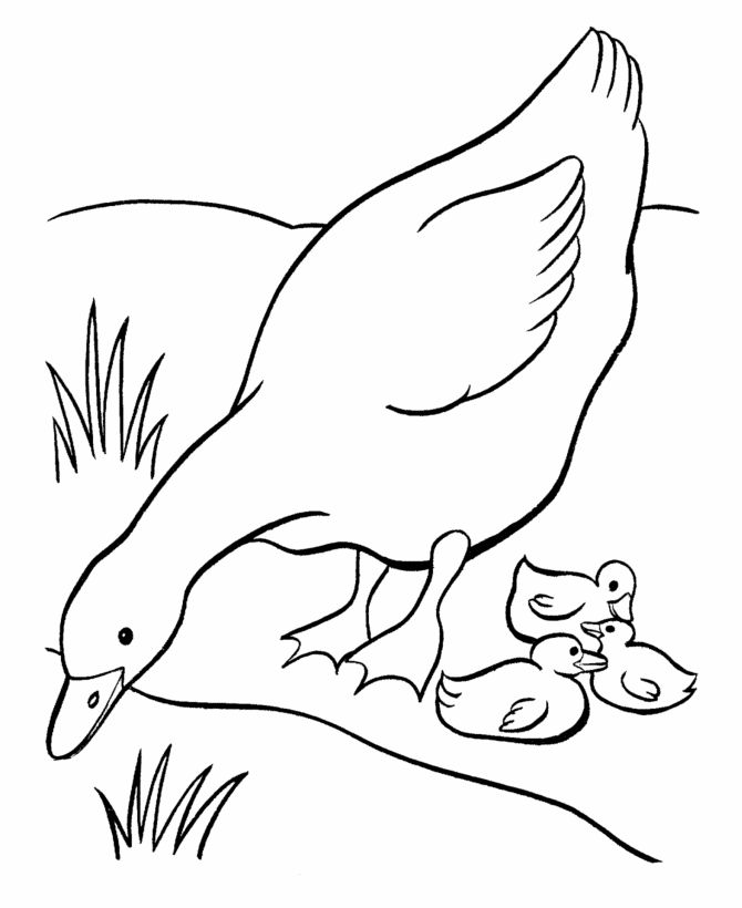 geese coloring pages for kids - photo#21