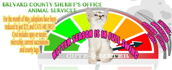Animal Services : Brevard County Sheriff's Office