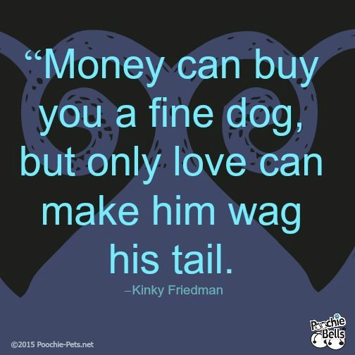 """Dog Quotes: """"Money can buy you a fine dog, but only love can make him wag his tail."""" -Kinky Friedman http://poochie-pets.net/pooch-inspiration-dog-quotes-41/"""