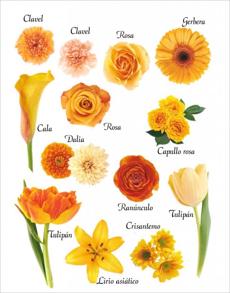 Flores de color naranja                                                                                                                                                     Más