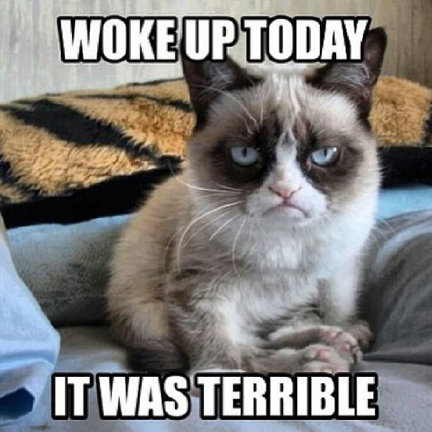 grumpy cat quotes, funny grumpy cat quotes, grumpy cat morning ...For the best humor quotes visit www.bestfunnyjokes4u.com/lol-funny-cat-pic/