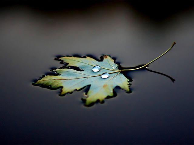 Капли, Черный фон, Вода, Отражение, лист