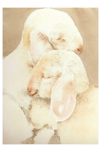 lambs by Simona Cordero, via Flickr