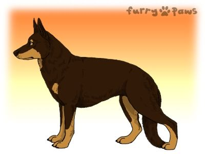 Furry Paws // UCT Kip's Enlisted von Heike [1.603] 12.4 *BoB*'s Kennel