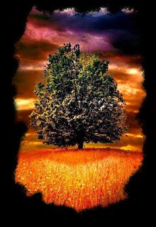 amimsped: Charlas con el árbol solitario.     Primer saludo:...