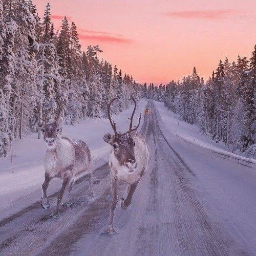 Traffic jam Finnish style. Happy #Weekend all! Found at…