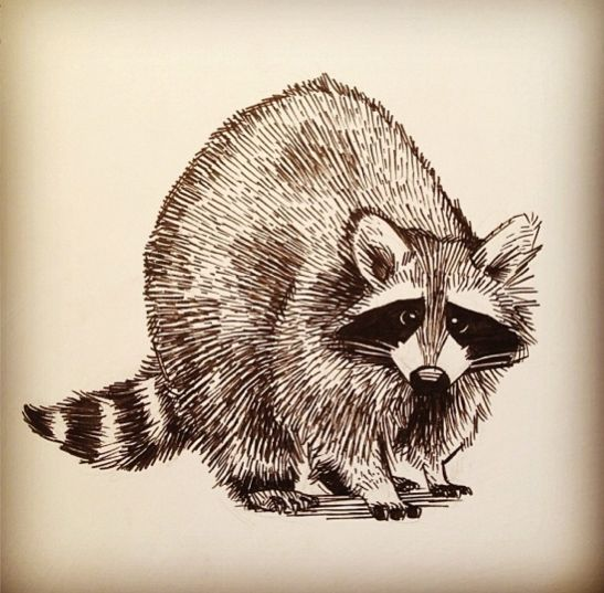 25+ best ideas about Raccoon Illustration on Pinterest ... Raccoon Face Illustration