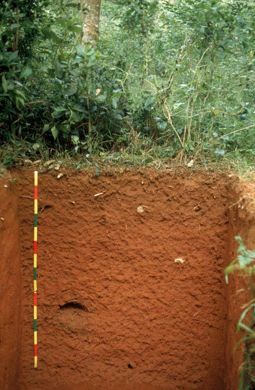 acrisol suelos cidos fuertemente lavados o lixiviados color rojizo o fuertemente