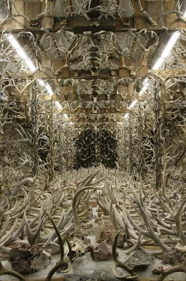 """Jim's Horn House"" — Jim Phillips, 59, has been hunting shed antlers Montana public lands for the past 50 years. This Three Forks native's phenomenal shed antler collection comprises some 14,500 sheds displayed from floor to ceiling—inside a 30 x 64-foot building he constructed specifically for its display. And, yes, he personally found every one. I think they may have used this place to shoot a scene in ""Hannibal"" (NBC) -- if not they blatantly copied it."