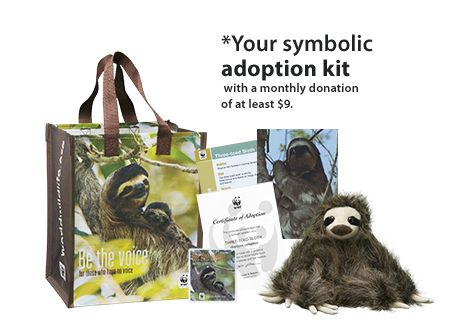 Sloth Adoption Kit Symbolically adopt a Sloth