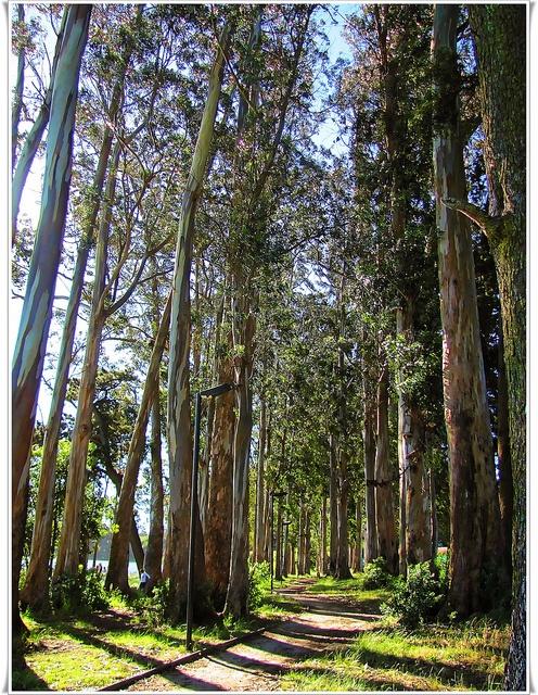Bosque Parque Laguna Grande de San Pedro de la Paz, Concepción