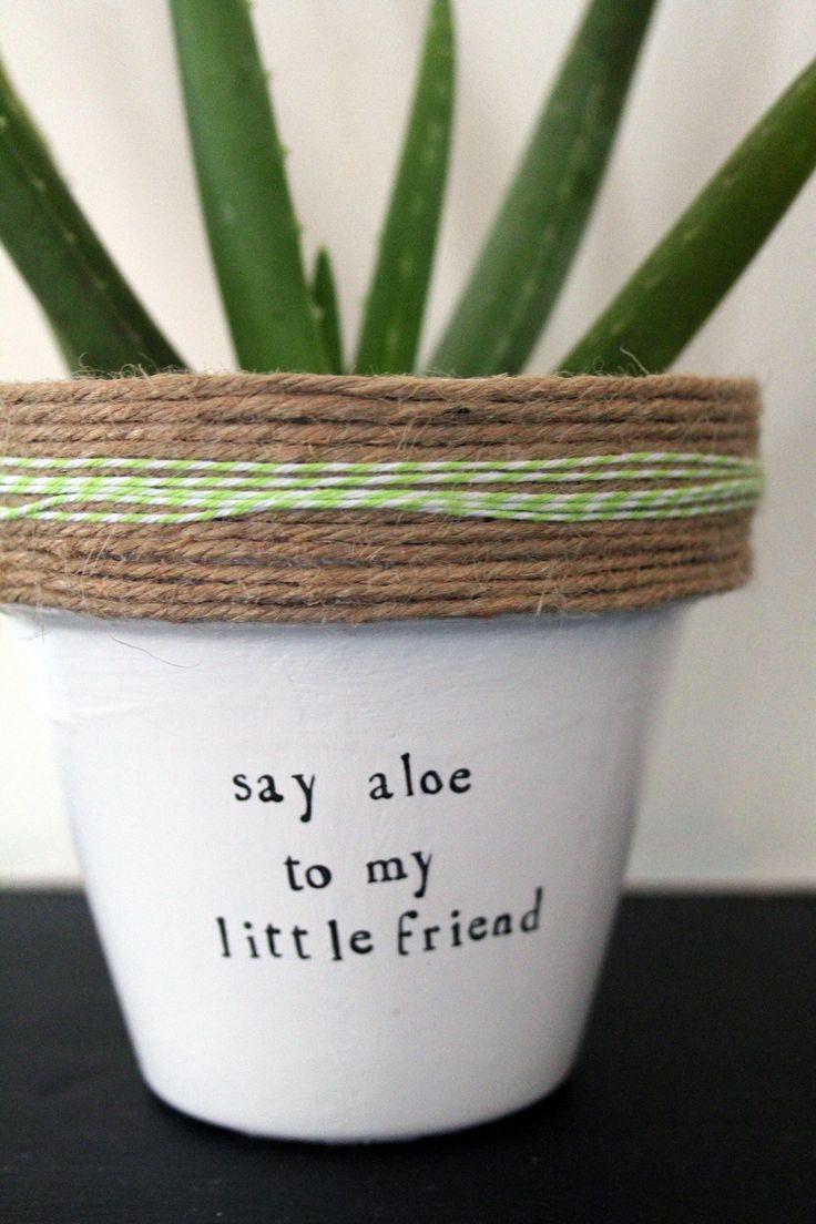 The 25 best succulent pots ideas on pinterest succulent for Cactus in pots ideas