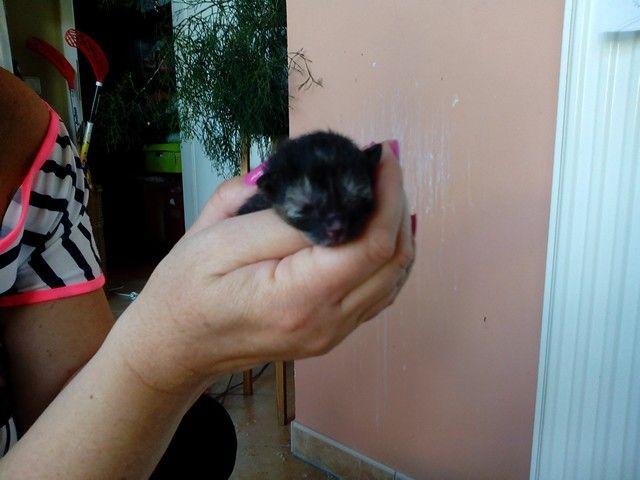 My cat Bibi have three kitten:-) :-) :-)