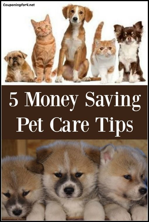 5 Money Saving Pet Care Tips - having pets can be expensive, so use these tips to help you save!