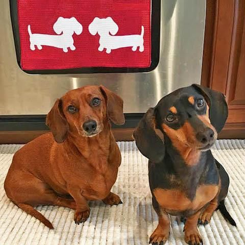 Dachshund Kitchen Accessories