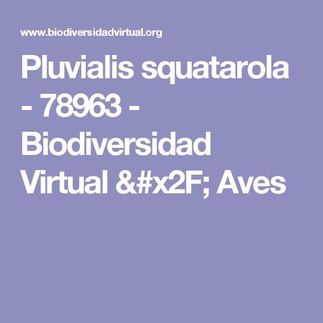 Pluvialis squatarola - 78963 - Biodiversidad Virtual / Aves