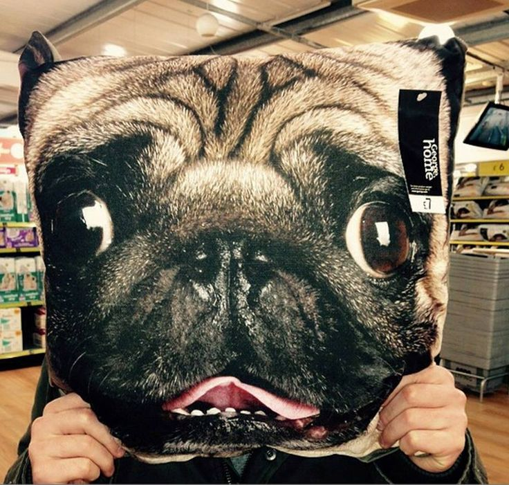 Our George Home pug cushion is just £7!