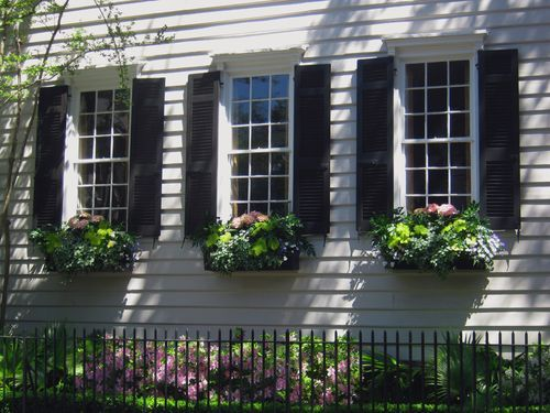 .Windowboxes, Charleston Sc, Charleston Windows, Windows Boxes, Boxes 003, Black Shutters, Southern Charm, Pink Hydrangea, Window Boxes