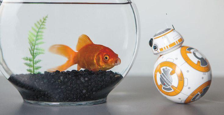 Το Star Wars επιστρέφει… στο σπίτι σου! Το ρομποτάκι BB-8 διαθέτει αυθεντική ρεαλιστική κίνηση, μπορεί να ανταποκρίνεται σε φωνητικές εντολές, ενώ όσο περισσότερο επικοινωνείς μαζί του, τόσο περισσότερο αυτό αναπτύσσει τη δική του προσωπικότητα! Απόκτησέ το τώρα από τα καταστήματα της Media Markt! #mediamark #gadget #gadgets #onlinestore #offer #offers #tech #technology
