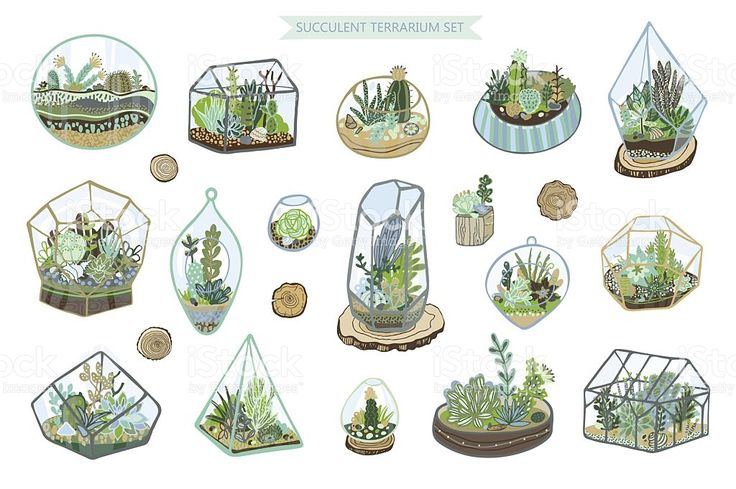 succulent cactus terrarium vector color hand drawing set