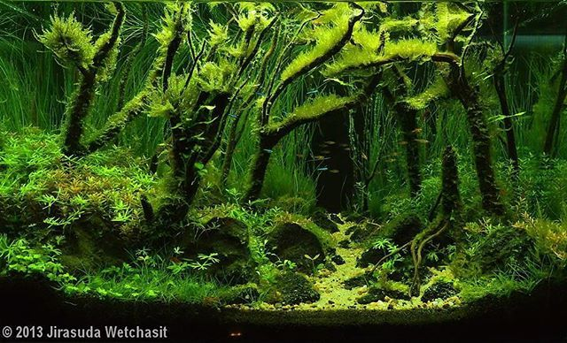Awesome green tank ------------------------------------------------ #aquascape…