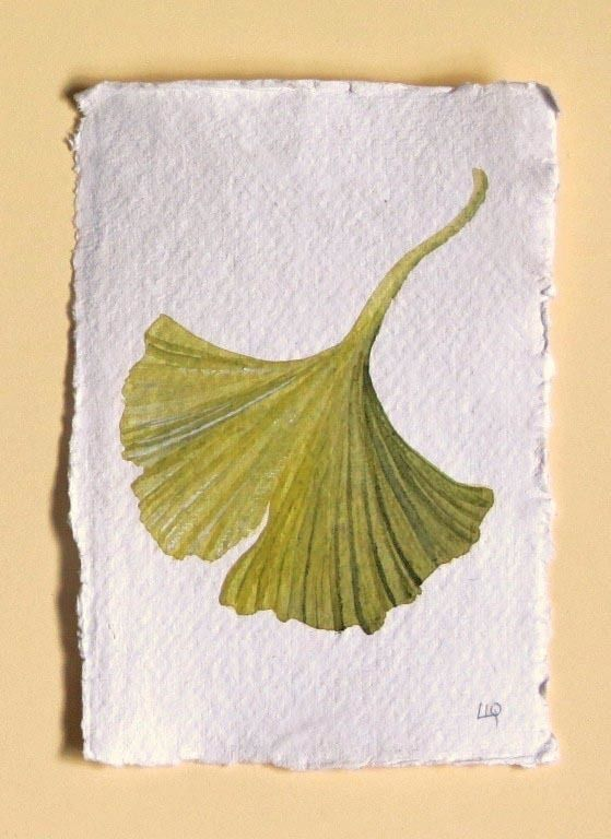Gingko leaf original watercolour painting illustration study illustration £30.00 by Lisa Le Quelenec
