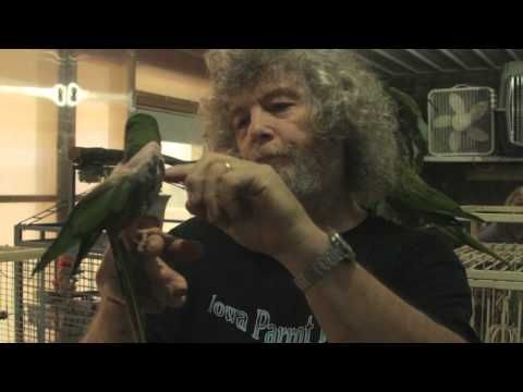 Iowa Parrot Rescue Does It Right - http://www.parrotshop.org/iowa-parrot-rescue-does-it-right/