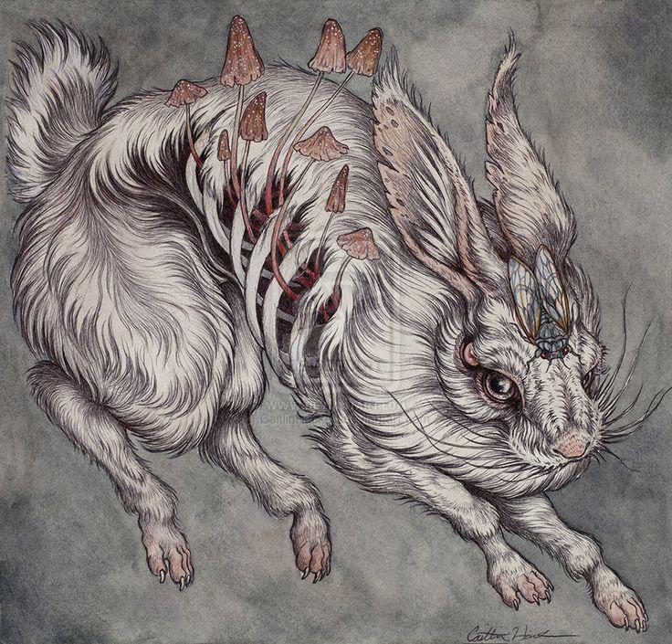 caitlin hackett | Mushroom Hare by CaitlinHackett