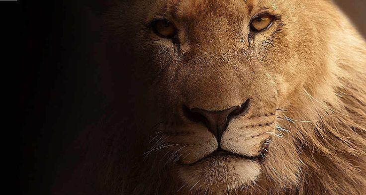 02.08.2016 – Der Neumond im Löwen erzählt von Liebe und Licht