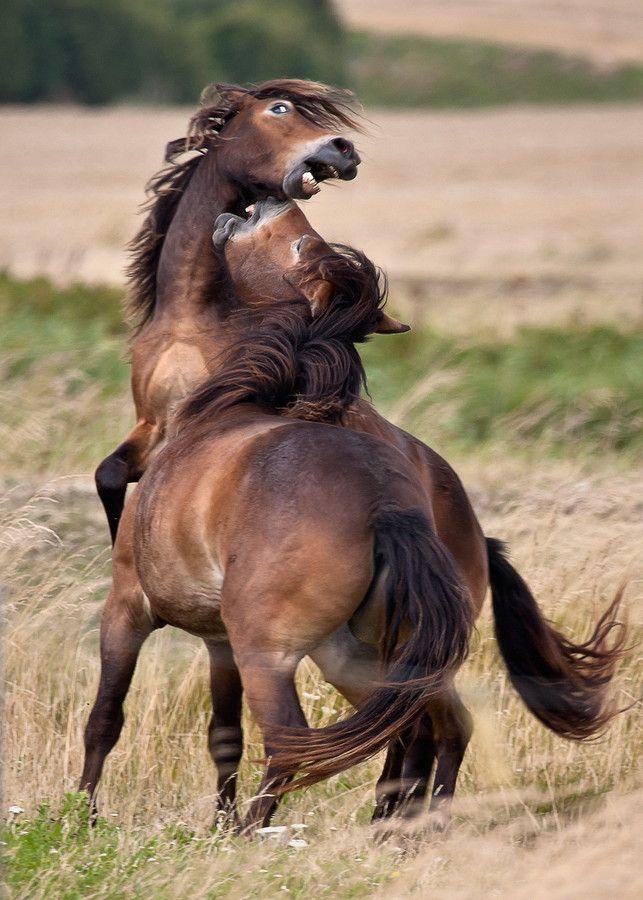 Wild horses at Langeland by Steen Rasmussen on 500px