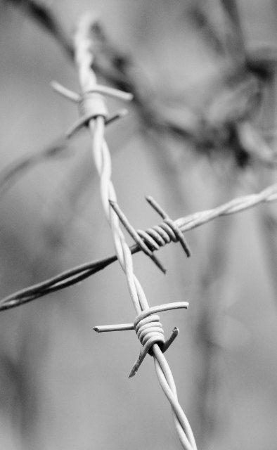 Barbed Wire Photo, Rustic Home Decor, Halloween Photography, Southwestern Photography, Southern, Cowboy, Cowgirl, Farm, 16x24 Print