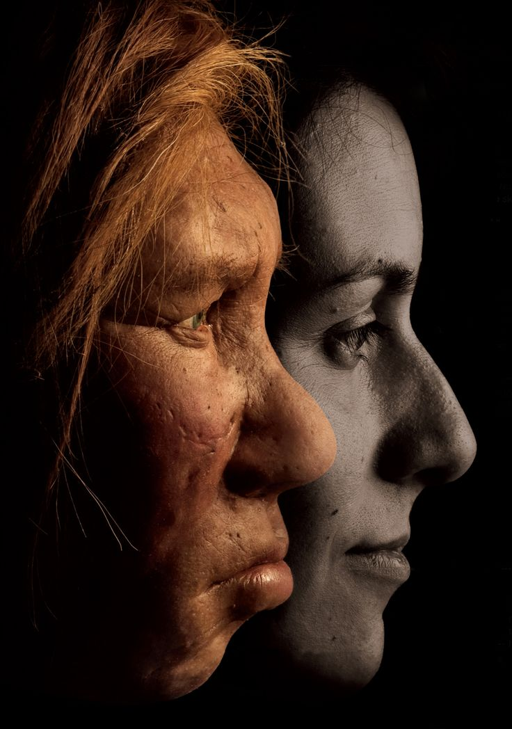 Two new studies suggest that the contribution from Neanderthal DNA was vital to modern human genomes..
