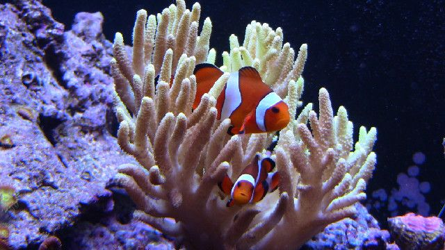 1000 ideas about saltwater fish tanks on pinterest for Best beginner fish
