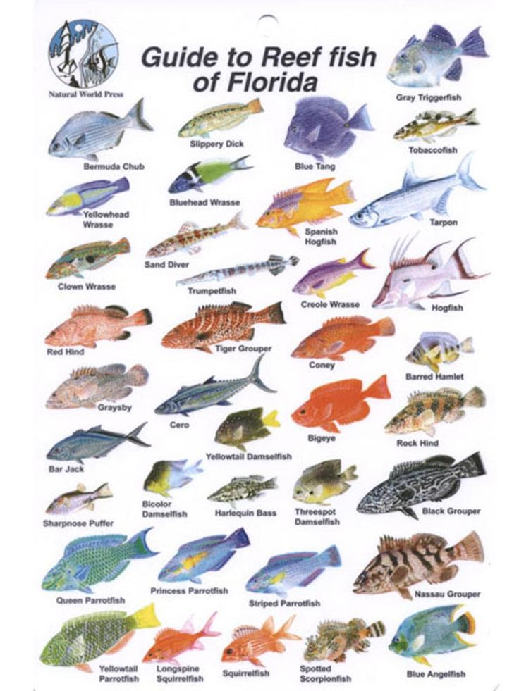 Waterproof Fish Identification Card: Florida Fish ID Card ...