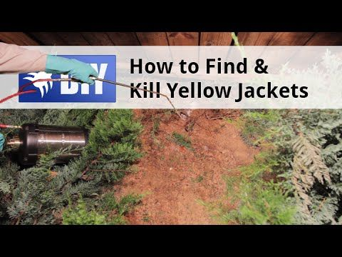 Yellow Jackets, also known as ground bees, are a dangerous pest that need to be exterminated quickly. This video demonstrates how to safely eradicate a Yellow Jacket nest. For a step-by-step guide to getting rid of Yellow Jackets yourself, click here: https://www.pinterest.com/pin/237635317814520963/ For more information about treating Yellow Jackets, go to http://www.domyownpestcontrol.com/how-to-get-rid-of-wasps-a-505.html